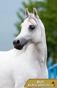 Special Horses